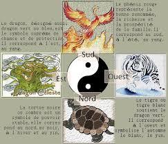 phœnix tortue